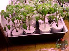 Как помочь рассаде наростить мощную корневую систему? Рост корневой системы растений на прямую связан с ростом надземной массы листьев и стеблей. Даж... - Сад «Огородко» огород - Google+