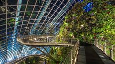 Image result for Cloud Forest in Singapore