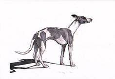 Whippet drawing whippet art print from original by JimGriffithsArt