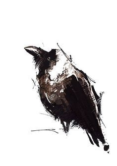 crow pen & Ink