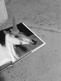 Ha! Unicorn