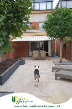 Budget, Patio, Outdoor Decor, Tips, Home Decor, Lush, Seeds, Decoration Home, Room Decor