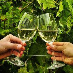 ¡Salud! ¡Chers!   #copas #brindis #vino #vinho #vin #vineyard #viñedo