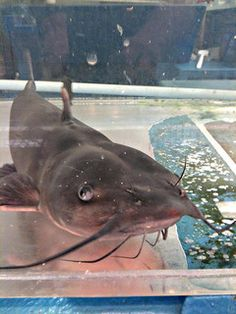 Catfish...another one i wont eat based on its looks. Lol squeamish cook i say