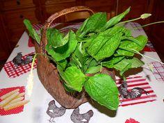 La Piantaggine è un Erba Portentosa , non solo in cucina ove è impiegata in vari modi ma anche perché ricca di virtù ; tra cui spiccano quelle disinfettanti