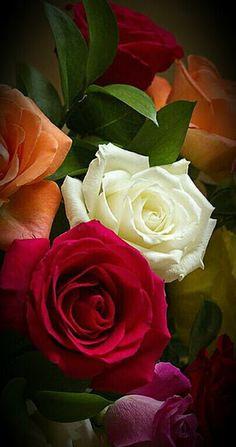 : * Rosas *: - Comunidade - Google+