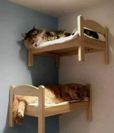 Cats furniture diy bunk bed 66 Ideas for 2019 Cat Wall Furniture, Modern Cat Furniture, Furniture Legs, Barbie Furniture, Garden Furniture, Furniture Design, Animal Room, Cat Wall Shelves, Cat Climbing Shelves