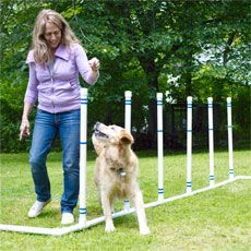How to Build a Pet Agility Course  Build this easy-to-assemble agility course for your dog, and watch him get happier, healthier—and smarter