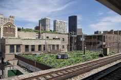 Red Line Green Roofs Initiative