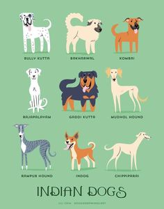 Dog Names Discover Indian Dogs art print Dog Breeds Little, Best Dog Breeds, Dog Breeds List Of, Best Dogs, Dog Breeds Chart, Animal Doodles, Easiest Dogs To Train, Street Dogs, Dog Poster