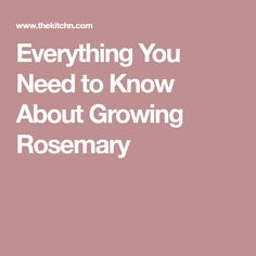 Everything You Need to Know About Growing Rosemary