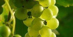 World Top Ten Grape Producing countries