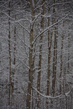 Forest in winter. Photo: Åse Margrethe Hansen, 2015