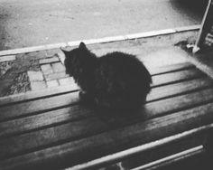 #catsofinstagram #cat #busstation #blackandwhite #animal