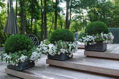 O Impaciente Jardineiro: RECURSO SEXTA: projeto recipiente