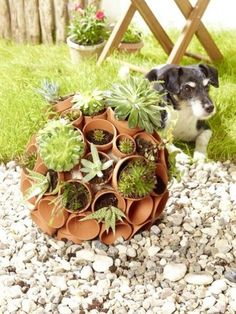Autumn Decoration For The Garden Do It Yourself - Garden Design Ideas Cactus Plante, Get Outdoors, Succulent Pots, Farm Yard, Outdoor Art, Orchid Care, Garden Pots, Diy Garden, Garden Ideas