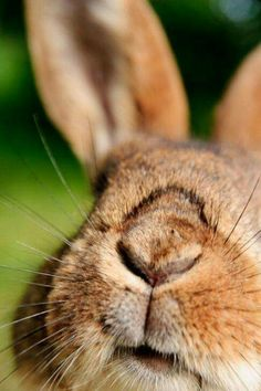 Bunny nose in color