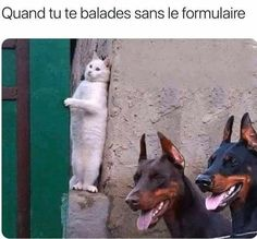 Lol, Instagram, Animals, Crown, Humor, Laughing So Hard, Animales, Animaux, Animais