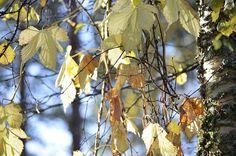 http://www.pienilintu.blogspot.fi/2014/10/the-beauty-of-autumn.html