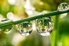 #Health #Fitness True joy of nature is when every drop of water shines like a pearl... - Anamika Mishra http://pic.twitter.com/ITVzGJhE1x  Suzann   Health_Fitness club (@Health_Fit__nes) September 10 2016