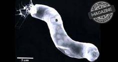 Ex biologo NASA presenterà prove di vita aliena all'UFO Congress - Il controverso ricercatore ed astrobiologo Richard Hoover con i colleghi del Centro di Astrobiologia dell'Università di Buckingham ha, per molti anni, fatto scalpore in tutto il mondo per le sue affermazioni riguardo le prove di vita extraterrestre.Hoover presenterà alcune di queste prove, al Congresso Internazionale sugli UFO  (International UFO Congress) che si svolgerà giovedì 13 febbraio presso il Radisson Fort McDowell.