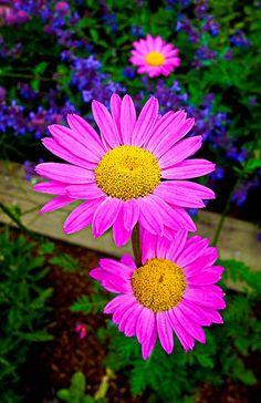 No hay dos flores iguales :-)