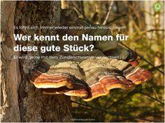 Ein wirklich schönes Stück!  #natur #baum #pilze #wissen #erfahrung #outdoorpädaogik