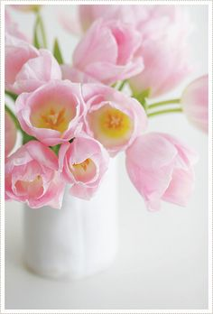 Lovely pink tulips.
