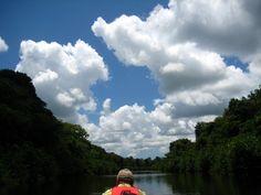 Brilliant blue sky, crisp white clouds, deep green trees and dark black water - near Cupido, Suriname - Aug 2009