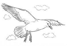 Gaviota volando Dibujo para colorear