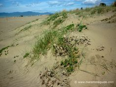 Principina a Mare spiaggia: dunes