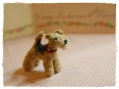 Miniature pipe cleaner  welsh terrier