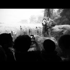 Akeley Hall of African Mammals via @kanja1968