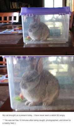 Funny pictures about Angry Rabbit. Oh, and cool pics about Angry Rabbit. Also, Angry Rabbit photos. Cute Funny Animals, Funny Cute, The Funny, That's Hilarious, Funny Bunnies, Tumblr Funny, Funny Memes, Top Memes, Animal Pictures