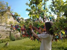 The golden pippin apple tree in the orchard, better known as the wishing tree, is covered in hundreds of colourful ribbons. Thought to have magical, spiritual or healing powers, lots of people return year after year to add another ribbon.