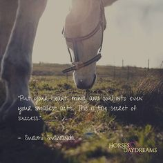 """""""Put your heart, mind, and soul into even your smallest acts. T his is the secret of success. Equestrian Quotes, Secret To Success, Success Quotes, Daydream, Acting, Mindfulness, Horses, Sayings, Heart"""