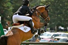 Horse has great form! || equestrian show jumping | bay jumper