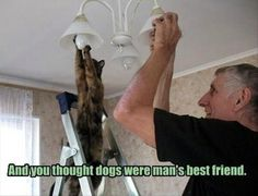 Dump A Day Funny Animal Pictures Of The Day - 20 Pics