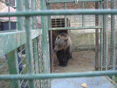Nicu, Brown Bear, Teddy Bears, New Life, March, Animals, Animales, Animaux, Animal