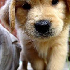 O my goodness so cute