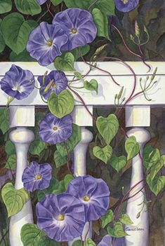 Morning's Glory     Original fine art watercolor painting of purple morning glories twining around a porch rail by Rose Ganucheau.