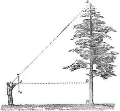 love some tree math Utility Pole, Outdoors, Math, Math Resources, Outdoor Spaces, Early Math, The Great Outdoors, Outdoor Living, Outdoor
