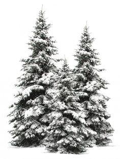 Flocked Christmas trees.