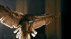 owlsstuff:  More irresistible owls here: http://ift.tt/JQ5da3 Photo source (http://ift.tt/TrQZ3w)