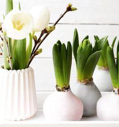 diy fr hbl her in wachs wachs und kerzen pinterest amaryllis in wachs wachs und blumen. Black Bedroom Furniture Sets. Home Design Ideas