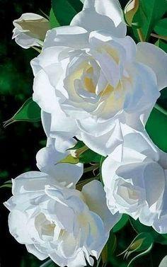 Hermosas Rosas de Floriferous Garden www. Beautiful Rose Flowers, Exotic Flowers, Amazing Flowers, Beautiful Gardens, Beautiful Flowers, White Roses, White Flowers, Orchid Flowers, Photo Rose