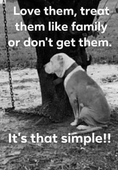 Teaching your dog is centered on building your relationship with your dog and implementing boundaries. Be firm but consistent and you will see awesome results when it comes to your dog training adventures. I Love Dogs, Puppy Love, Cute Dogs, Dog Quotes, Animal Quotes, Quotes About Animals, Animal Rescue Quotes, Animal Signs, Funny Animals