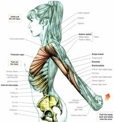 Stretching: How to Stretch the Anterior Deltoid - one of my favorite stretch, always feel tall the stretch