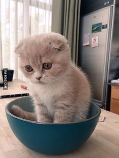 Sad cat is sad (and adorable)