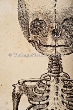"Fetus   Keywords:copyright 1844, 1800s, Vintage, Anatomy, Human, Person, Body, Medicine, Physiology, Sepia, print, Antique, Medical, Illustration, ""19th Century"", angle, selective focus, shallow depth of field, artistic, blurry, different, editorial, article, detail, close up, close-up, interesting, weird, shadow, Fetus, Embryology, abortion, baby, birth, body, born, care, creation, embryo, fertility, fetal, fetus, foetus, health, human, infant, innocence, insemination, life, little…"